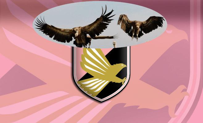 """Troppi avvoltoi attorno al Palermo, ma """"ccà nisciuno è fesso"""""""